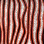 "Artist: Eileen Napaltjarri Title: ""Tali"" Size: 120cm x 90cm Materials: Acrylic On Linen Price: $3,900 (AUD)  Cat No: M0140"